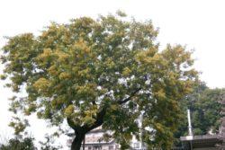 Absolut mimoze -356