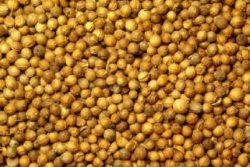 EO koriandra 5 g, ekološko -583