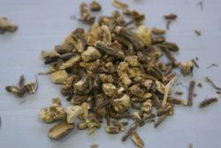 Korenina angelike, 20 g - NOVO-0